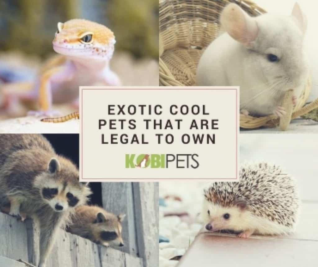 legal-exotic-pets-img