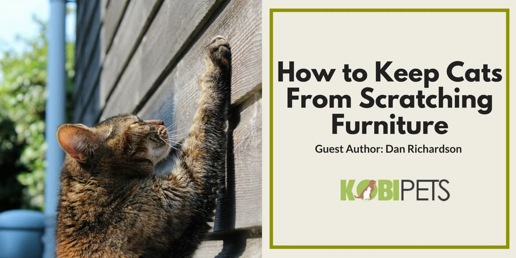 How To Keep Cats From Scratching Furniture Kobi Pets