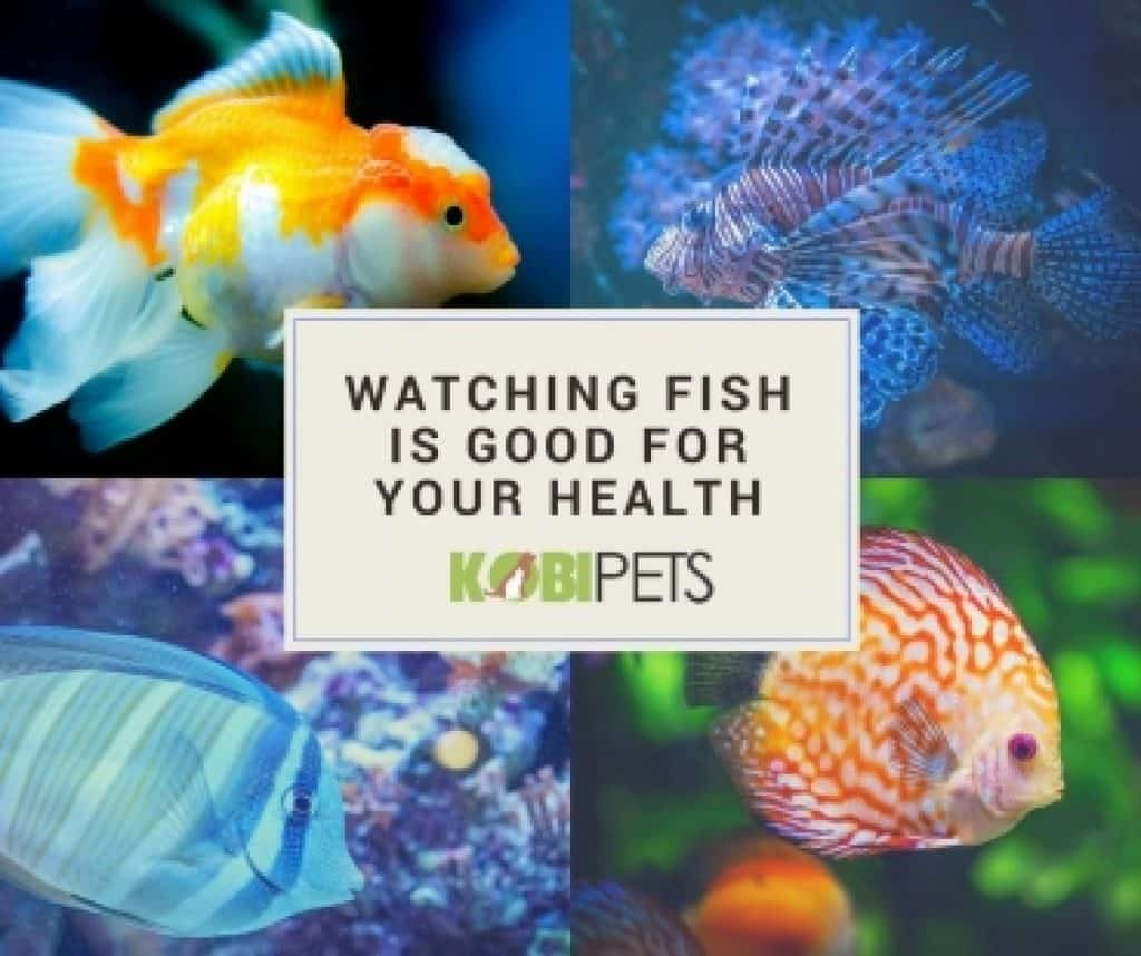 watching-fish-is-healthy-img