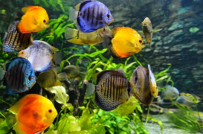 image of a freshwater aquarium