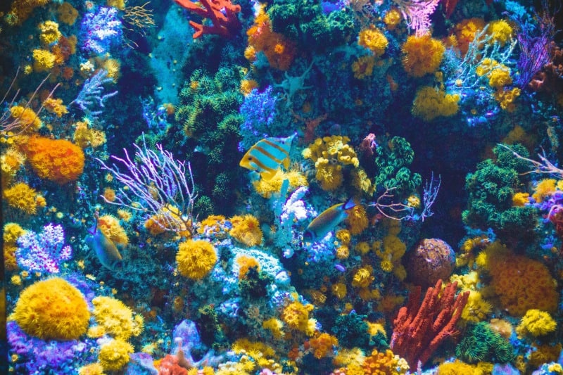 image of colorful corals in fish tank