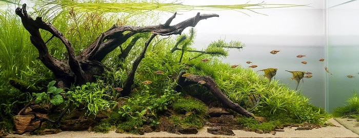 the-art-of-aquascaping