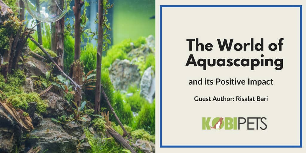 the world of aquascaping - featured image