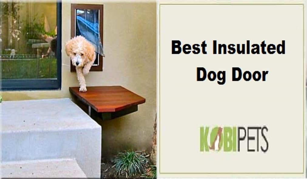 Best Insulated Dog Door