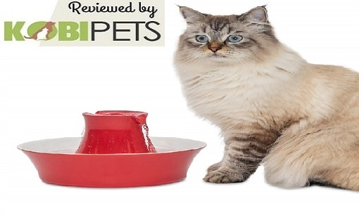 PetSafe ceramic pet pot