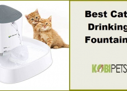 Best Cat Drinking Fountains