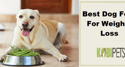 Best Dog Food For Weight Loss