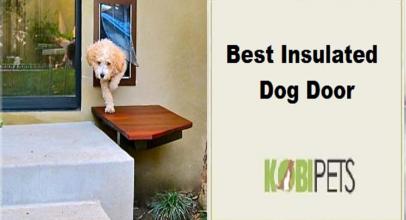 Best Insulated Dog Door