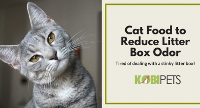 Best Cat Food to Reduce Litter Box Odor