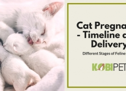 Stages of Cat Pregnancy – Feline Labor and Birth