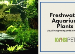Easy to Grow Freshwater Aquarium Plants