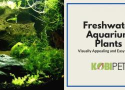 Easy to Grow Freshwater Aquarium Plants