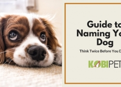 How to Name Your Dog and Not Regret It
