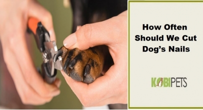 How Often Should We Cut Dog's Nails