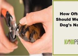 How Often Should We Cut Dog's Nails