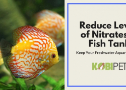 5 Tips on How to Reduce and Control Level of Nitrates in Fish Tank