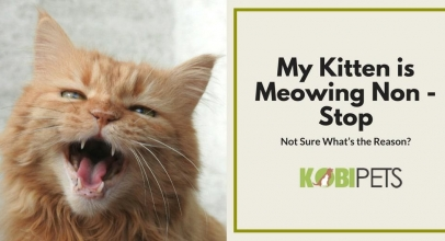 Why Is My Kitten Meowing Excessively?