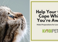 How to Help Your Cat Cope While You're on Vacation?
