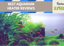 Best Aquarium Heater Reviews