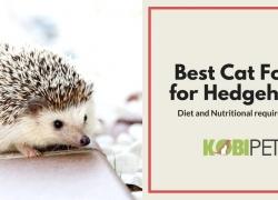 Best Cat Food for Hedgehogs