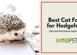 Best Cat Food for Hedgehogs