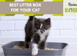 Best Litter Box for Your Cat – Top 5 Products on the Market