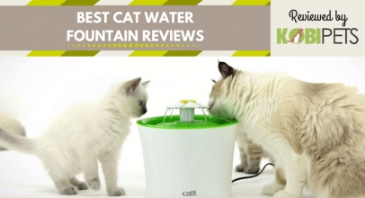 Best Cat Water Fountain Reviews – Our Top 5 Choices