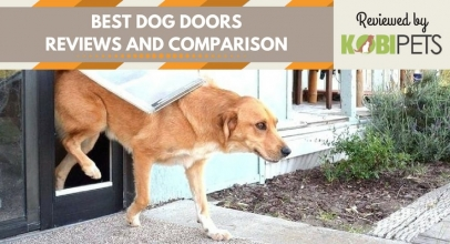 Best Dog Doors – Our Top 5 Picks for 2018