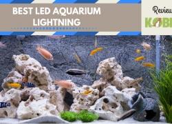 10 Best Led Aquarium Lights for Plants
