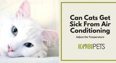 Can My Cat Get Sick From Air Conditioning?