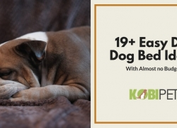 Creative and Easy DIY Dog Bed Ideas