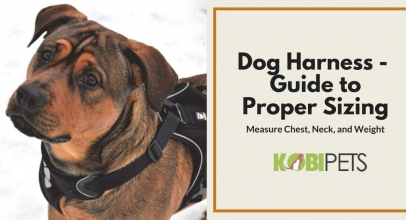 How to Choose the Right Size Harness for Your Dog?