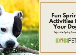 7 Spring Activities to Do with Your Dog