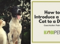 5 Tips on How to Introduce a New Cat to a Dog