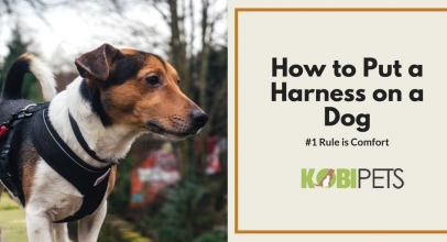 How to Put on a Dog Harness?