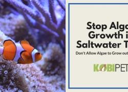 How to Stop Algae Growth in Saltwater Aquarium