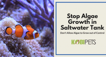 How to Stop Algae Growth in Saltwater Aquarium
