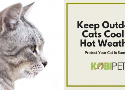 10 Tips on How to Keep Outdoor Cats Cool in Hot Weather