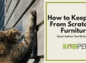 How To Stop Your Cat From Scratching Your Furniture