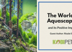 The World of Aquascaping and its Positive Impact
