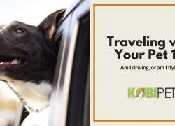 Everything You Need to Know Before Traveling with Your Pet
