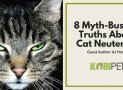A Must-Know: 8 Myth-Busting Truths About Cat Neutering